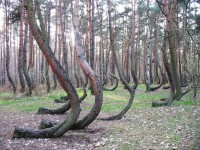 Crooked Forest ©noypistuff