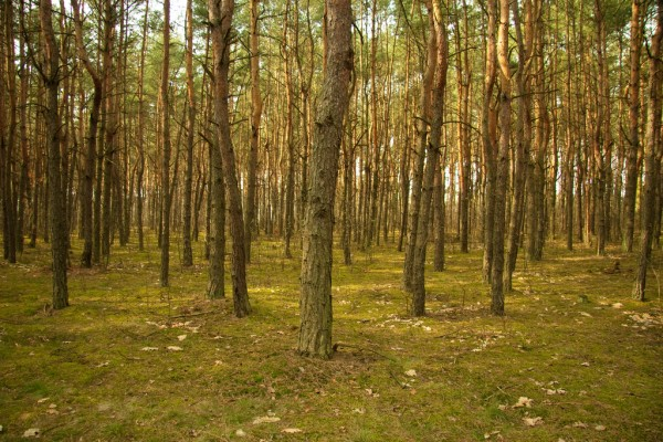 The largest urban forest in Lods, Poland