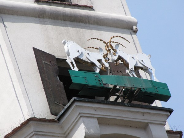 The goats of the Town Hall