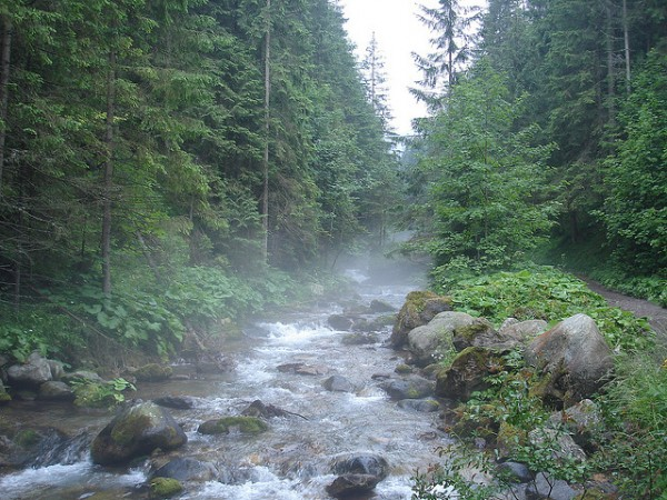 In the Carpathians